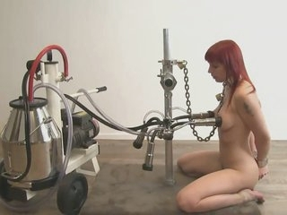 Cow milking Lola